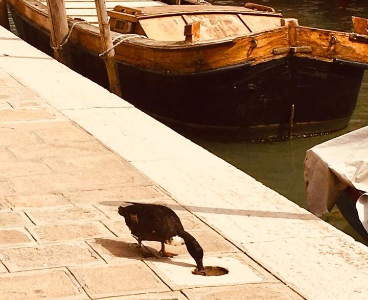 visiter Venise insolite
