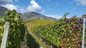Les vins de la Vallée d'Aoste